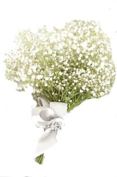 Accompagnements Gypsophile